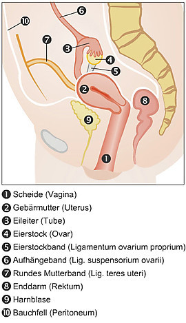 - (Gynäkologie, Blase, Blasenentzündung)
