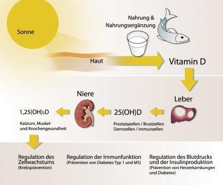 So entsteht das lebenswichtige Vitamin D - (Jugendliche, Sonne, Sonnenschutz)