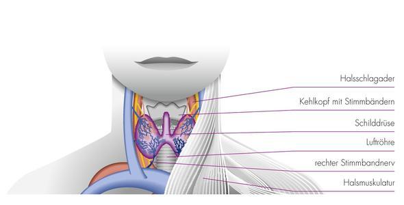 Schilddrüse  (Bild Quelle http://www.gz-w.de) - (Operation, Schilddrüse, HNO Arzt)