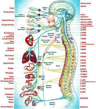 Wirbelsaeule  - (Medizin, Wirbelsäule, naturheilkunde)