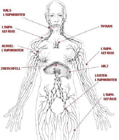 http://www.haematologie-hamburg.info/lymphomzentrum/ - (Hals, Lymphknoten, tastbarer lymphknoten)