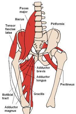 Muskel anterior - (Rückenschmerzen, LWS Beschwerden, Spondylodese)