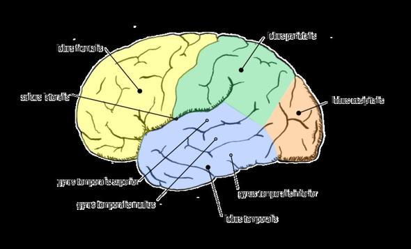 Gehirn3 - (Kopfschmerzen, Kreislauf, Diagnose)