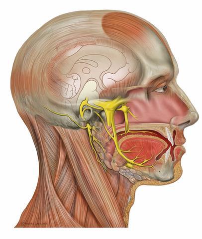 Nervus Facialis und Nervus Trigeminus - (Kopfschmerzen, Schwindel, Rückenschmerzen)