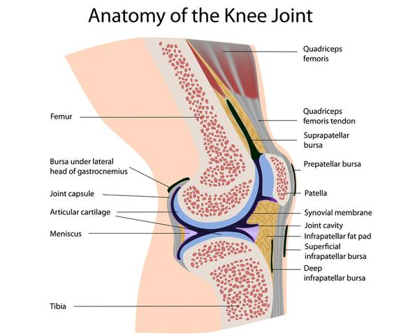 Knie1 - (Orthopäde, Sportverletzung, Sprunggelenk)
