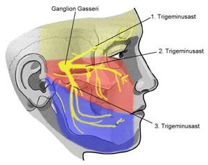 Nervus trigeminus - (Schmerzen, Psyche, Angst)