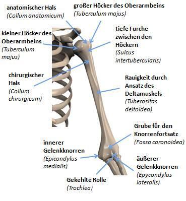 Oberarm - (Röntgenbefund, Sklerose am Tuberculum)