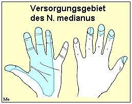 medianus - (Schmerzen, Arzt, Gesundheit)