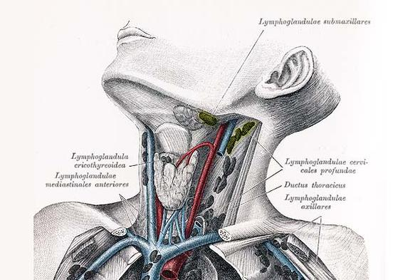 Lymphknoten  - (Haut, Lymphknoten)