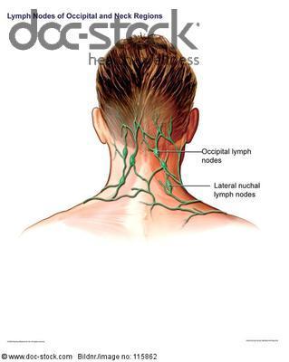 Lymphknoten im Nackenbereich - (Lymphknoten, Nacken)
