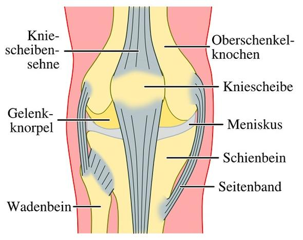 Knieproblem - (Schmerzen, Knie)
