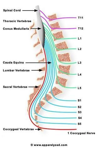Untere Wirbelsäule  - (Rückenschmerzen, Orthopäde, Sprunggelenk)