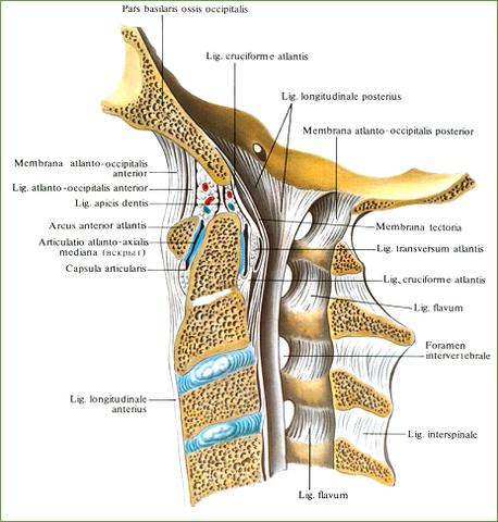 Hals2 - (Schwindel, Wirbelsäule, Halswirbelsäule)