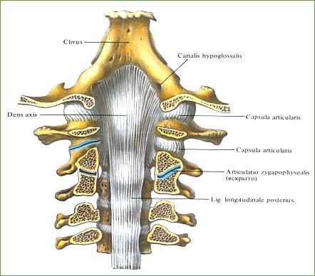 Hals3 - (Schwindel, Wirbelsäule, Halswirbelsäule)