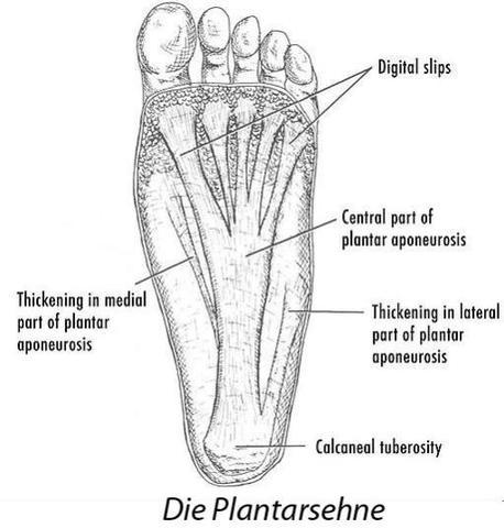 Plantarsehne  - (Schmerzen, Sport, Füße)