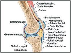 - (Behandlung, Knie, Therapie)