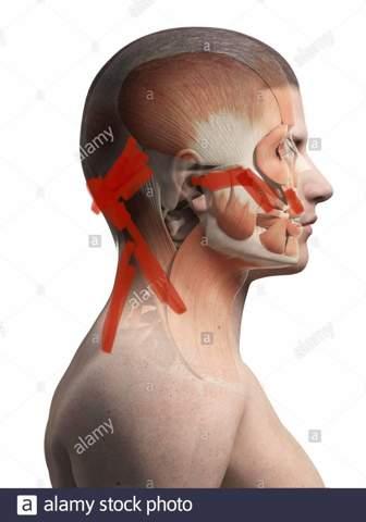 Druck hws und kiefermuskeln/ krämpfe?