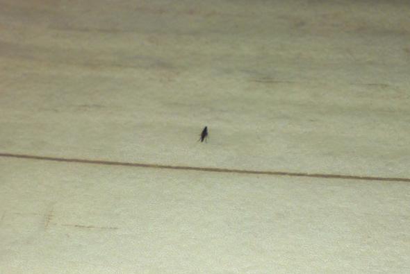 floh biss oder doch etwas anderes insektenstich stich. Black Bedroom Furniture Sets. Home Design Ideas