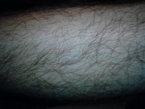 Bein (Knie bis Zehen) - (Körper, Haare, Behaarung)