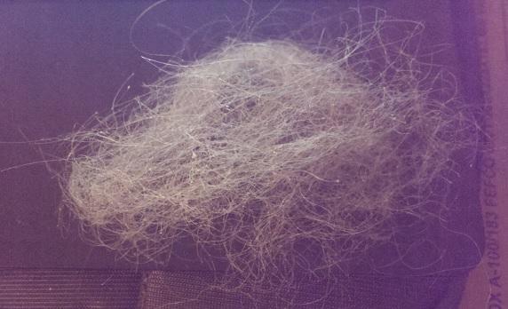 In der Bürste angesammelte Haarmenge innerhalb 6 Tagen - (Juckreiz, Haare, Kopf)