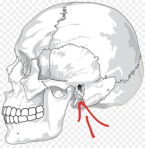 Was ist das für ein Knochen?